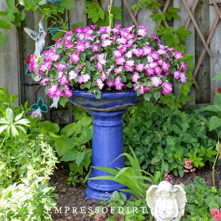 Birdbath planted with basket of purple-pink flowers.