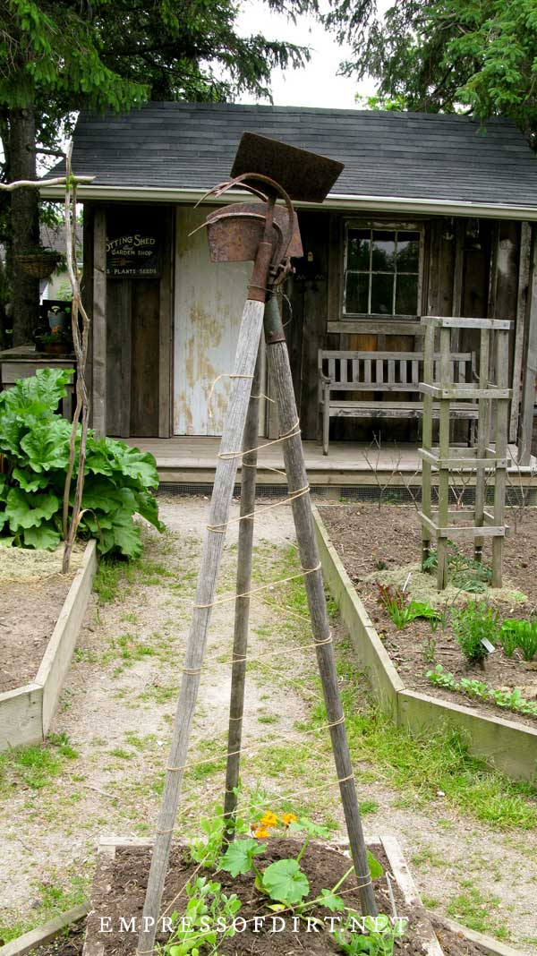 Old garden tools tied together to form a plant trellis in garden.
