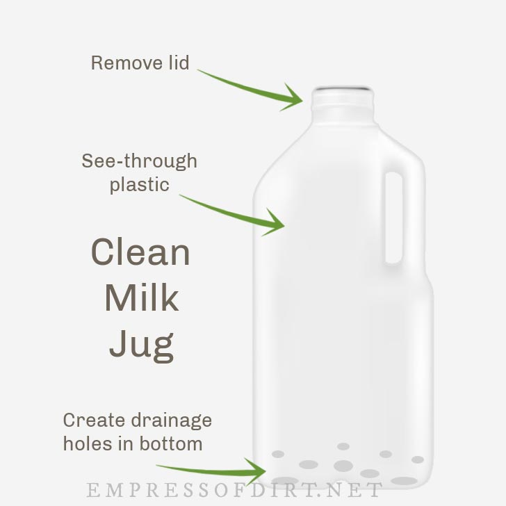 Winter sowing instructions showing clean milk jug.
