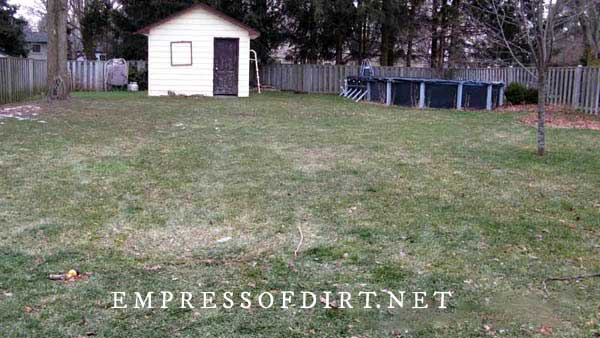 Year one starting a new garden: bare grass lawn with shed and old swimming pool.