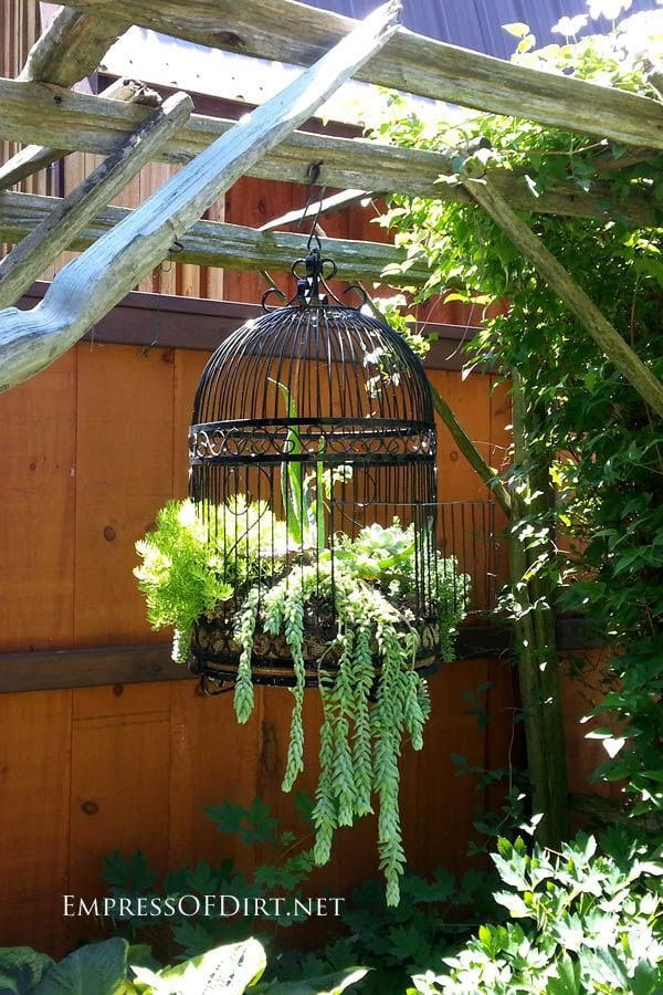 Antique Birdcage Succulent Planter in Garden