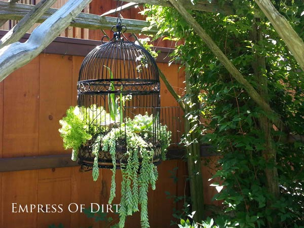 Various succulents and other plants in old fashion bird cage in garden.