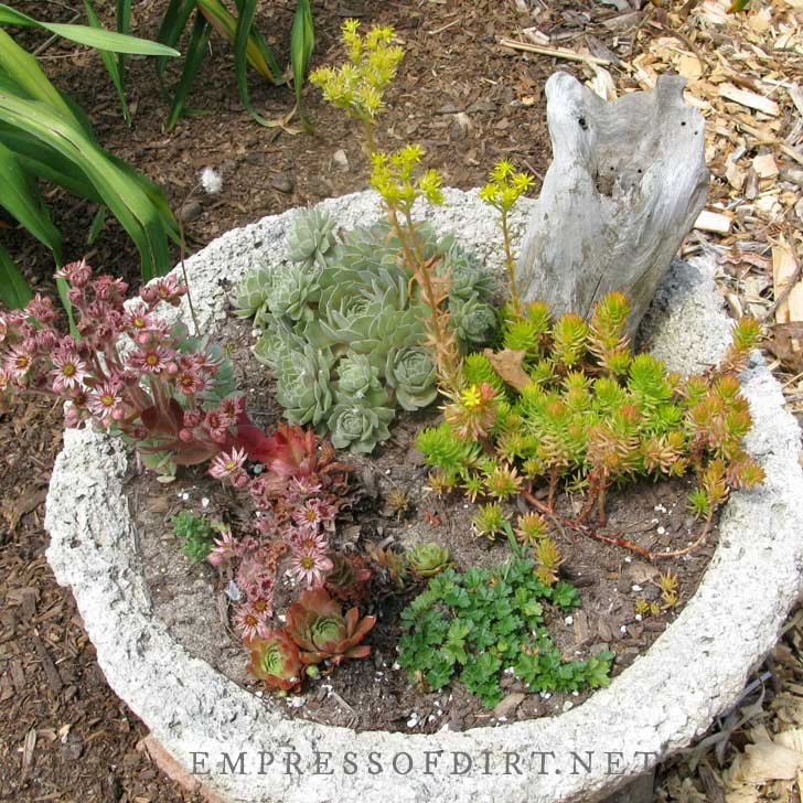 Birdbath planter with sedums and succulents.