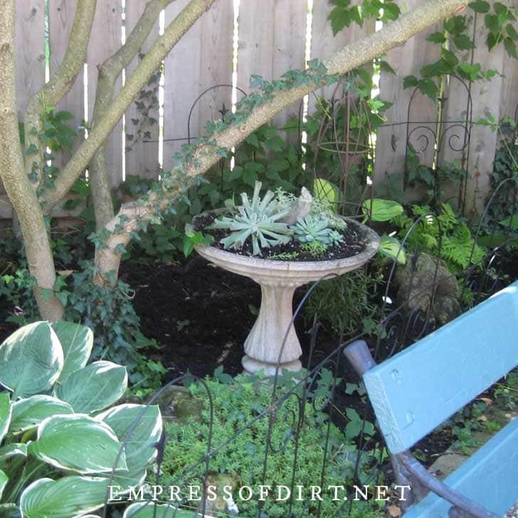 Succulents in a birdbath planter.