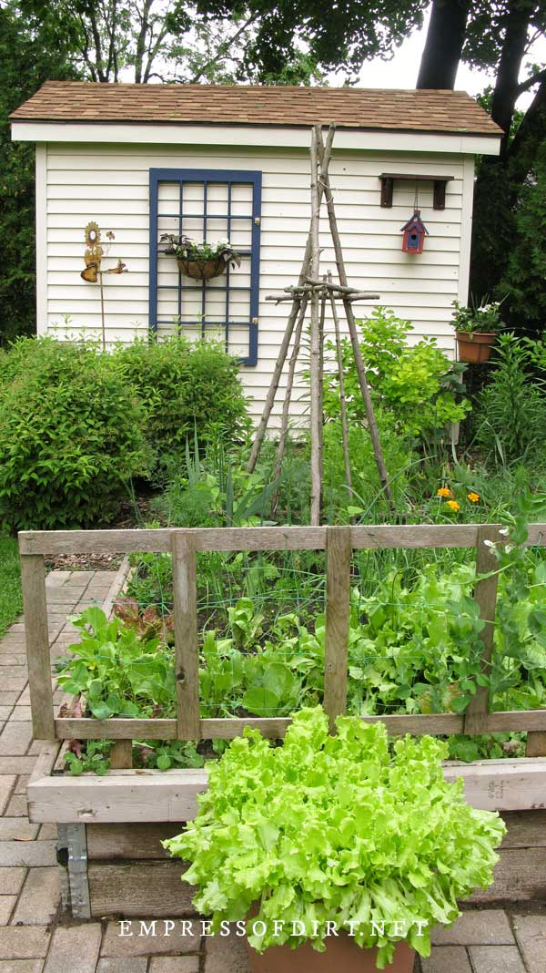 White shed, raised garden beds, and branch teepee trellis.