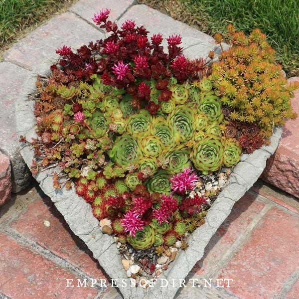 Heart-shaped hypertufa garden planter.