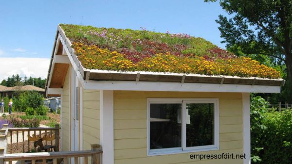 Yellow garden shed with white trim and sedum roof.