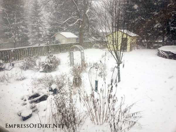 Backyard garden in winter with snow.