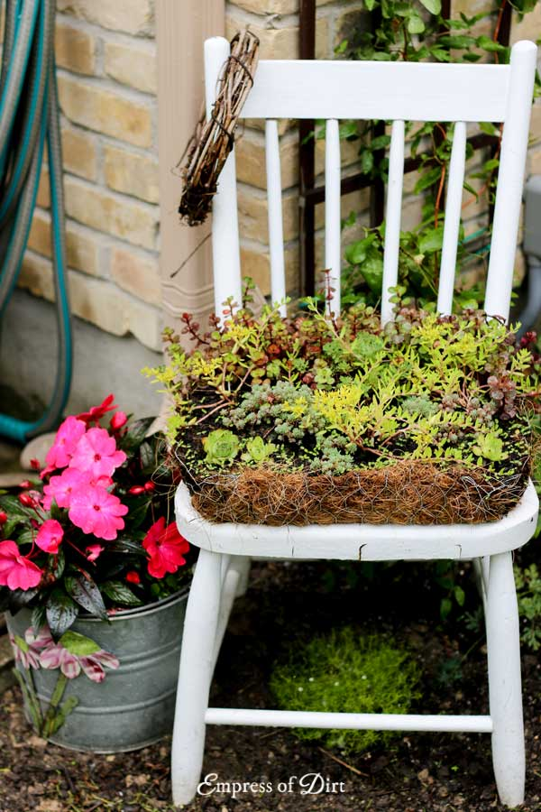 Chair Succulent Planter Beside Flower Pot with Pink Flowers