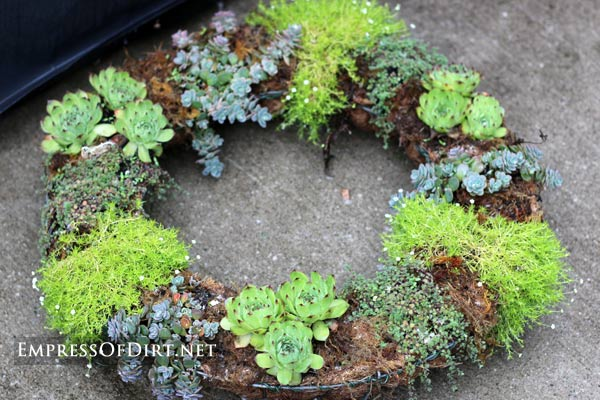 Garden wreath planted with succulents.