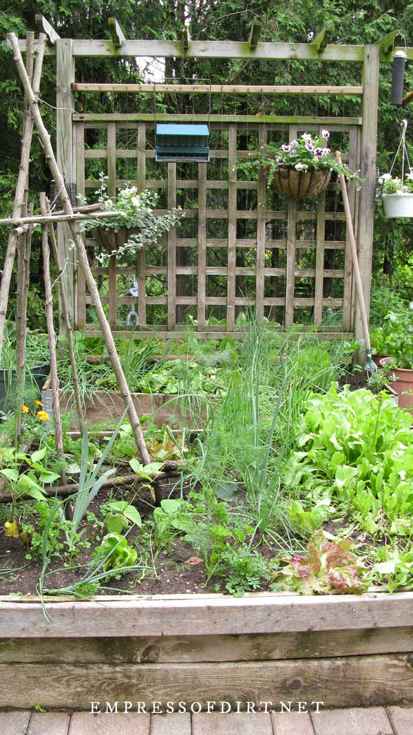 Raised veggie bed with trellis.