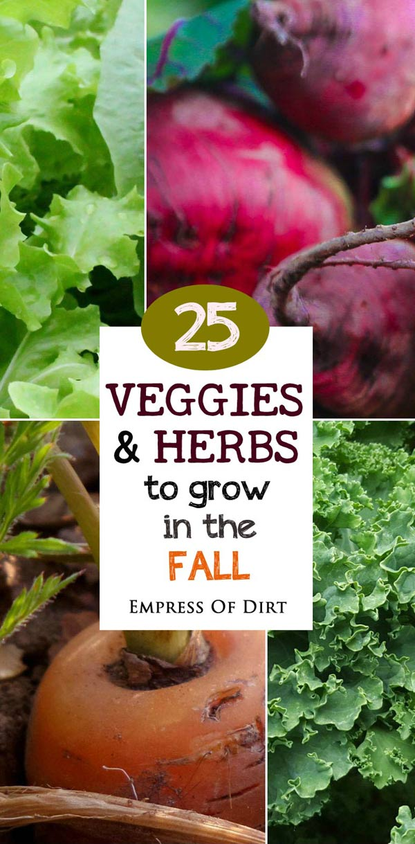 25 Veggies and Herbs to Grow in Fall