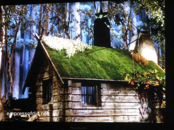 Cottage in the forest with wicked witch of the west from the wizard of oz.