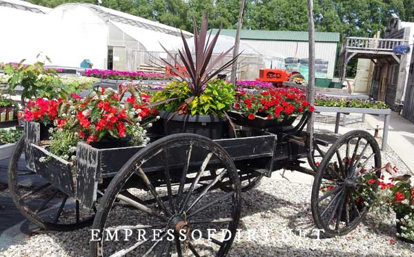 Amish Buggy with Planters