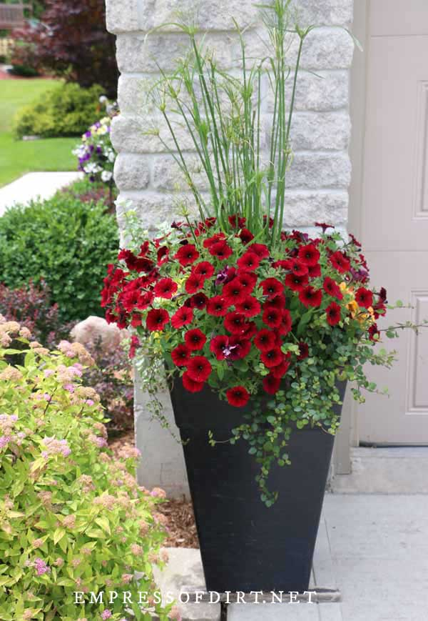 Black urn filled with red flowers and tall grasses.