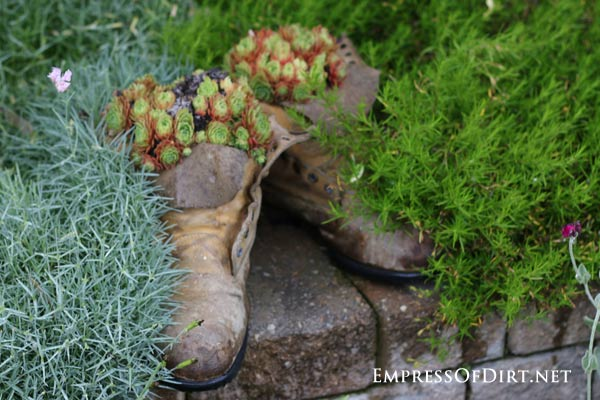 Old work boots planted with succulents.