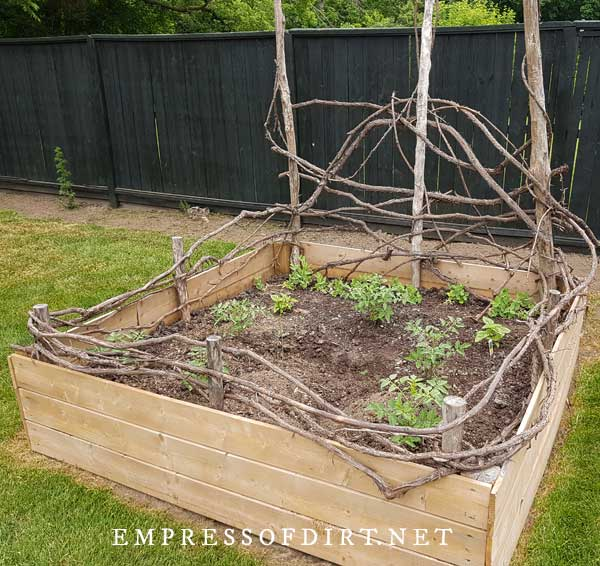 Square raised garden bed with vine branches on top.