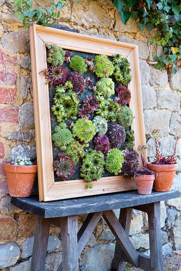 Framed succulent planter from the book Gardening on a Shoestring.