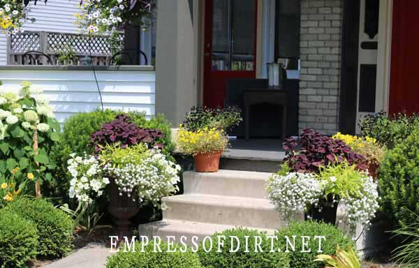 Front steps to house lined with planters.