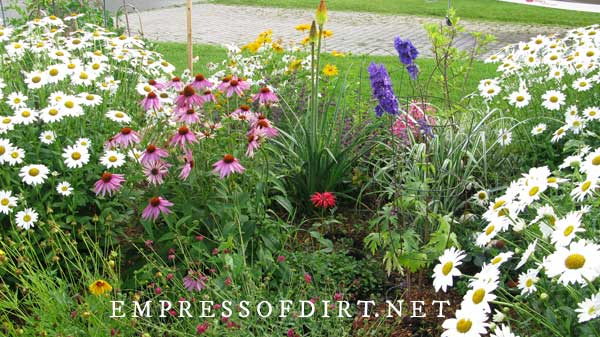 Garden bed with daisies, coneflowers, delphiniums, and more.