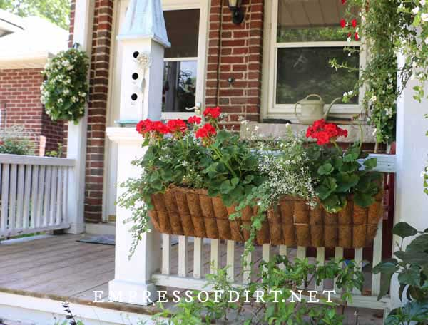 Hayrack Wall Planter with Coco Liner and Geraniums
