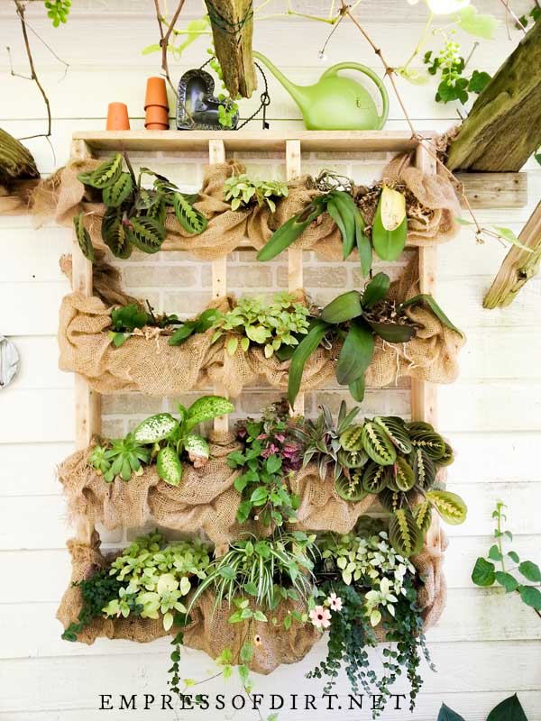 Simple wood wall shelves with tropical plants and burlap fabric.