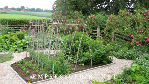 Country vegetable garden with branch trellis for peas.