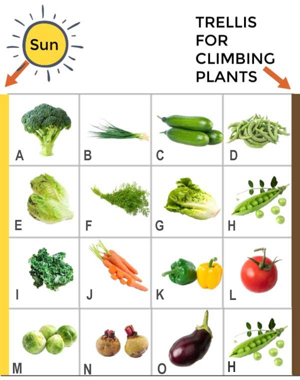 A sample garden plan for a backyard vegetable garden in 4x8-foot raised bed.