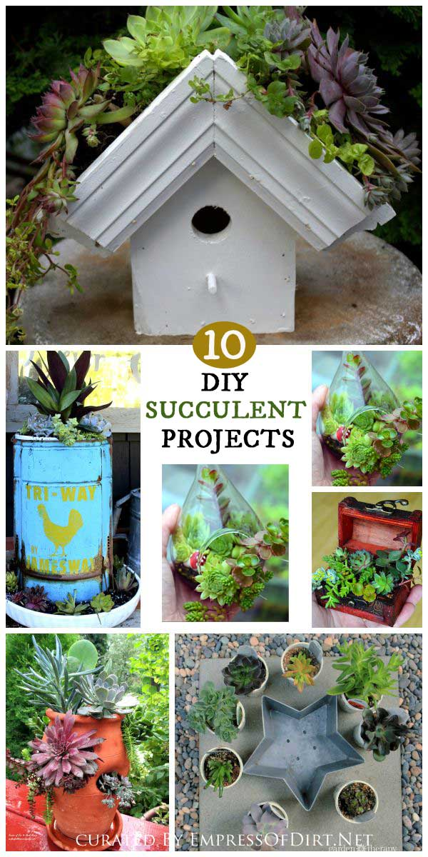 10 Delightful DIY Succulent Projects
