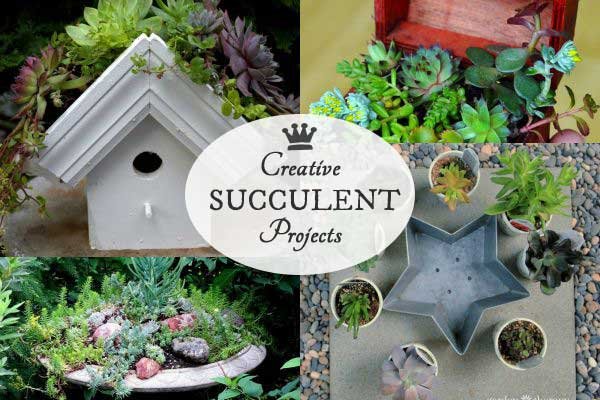 Creative succulent projects for your garden