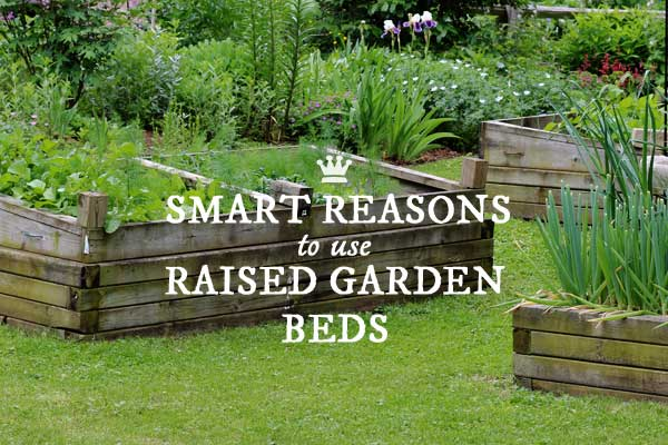 10 Smart Reasons to Use Raised Beds in Your Garden Empress of Dirt