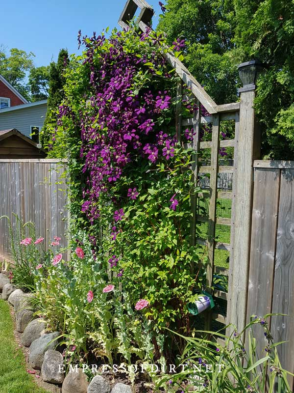 Trellis in Fence