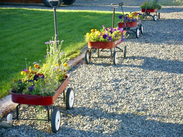 Little red flyer wagons planted with flowers on driveway.