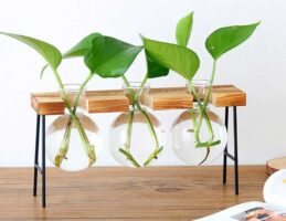Glass bulb rooting stand.