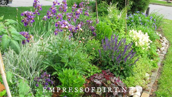 Purple flowers and green foliage in garden border.