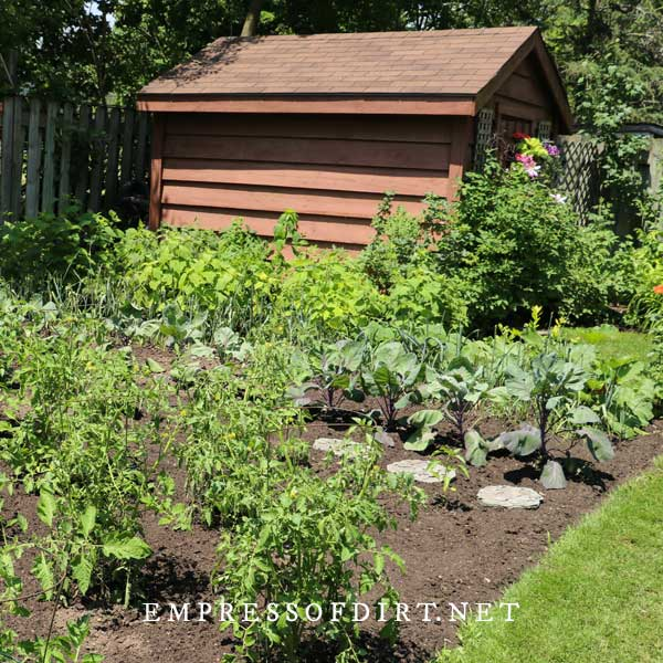 Traditional veggie garden and shed.