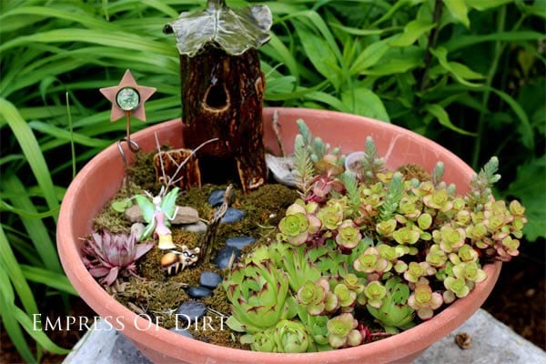 Fairy garden in a pot with succulent plants.