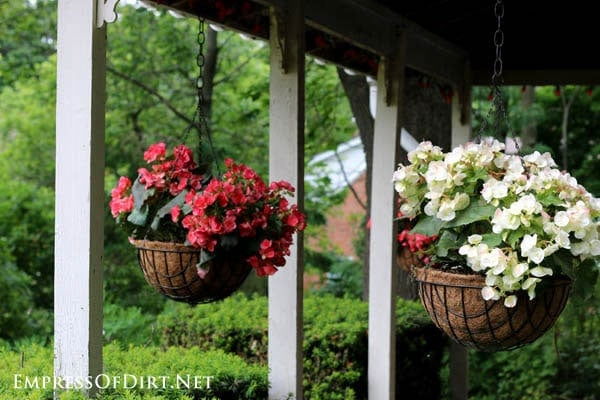 Colorful hanging baskets of begonias on front porch.
