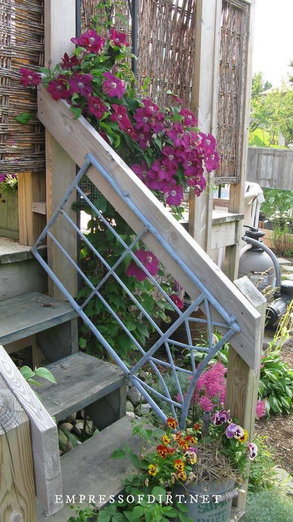 Steps to deck surrounded by purple clematis vine.