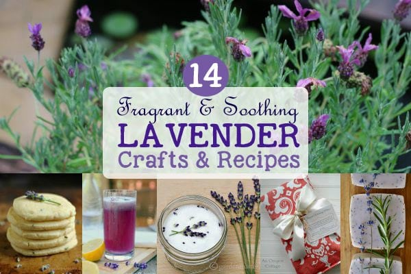 14 lavender crafts and recipes