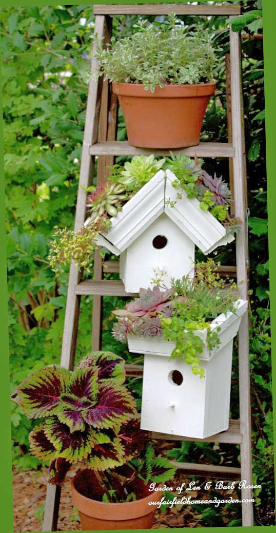 Ladder with birdhouses with green roofs by Barb Rosen.