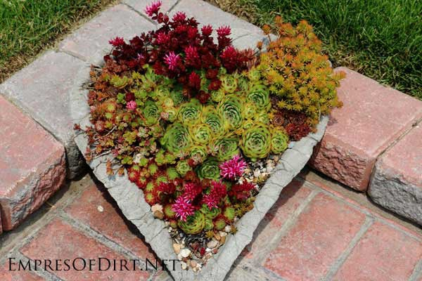 Heart-shaped hypertufa planter with succulents.