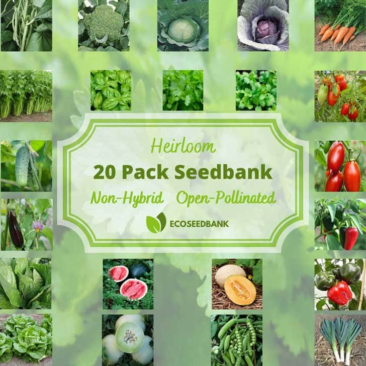 Vegetable seeds by ecoseedbank on etsy
