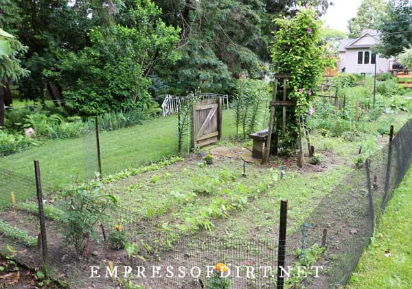 Long narrow in ground vegetable garden with fencing to keep animals out.