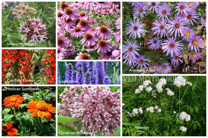 Flower seeds by sacredmists on etsy