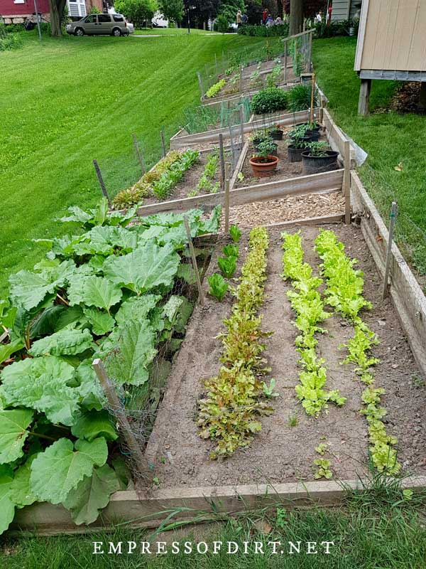 Long narrow vegetable garden beds on sloped lawn.