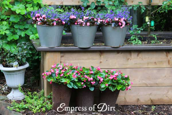 Rusty flower pots with pink flowers.