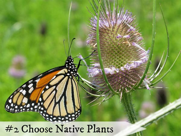 Native plants have adapted to the local climate and growing conditions to exist in harmony with wildlife and insects.