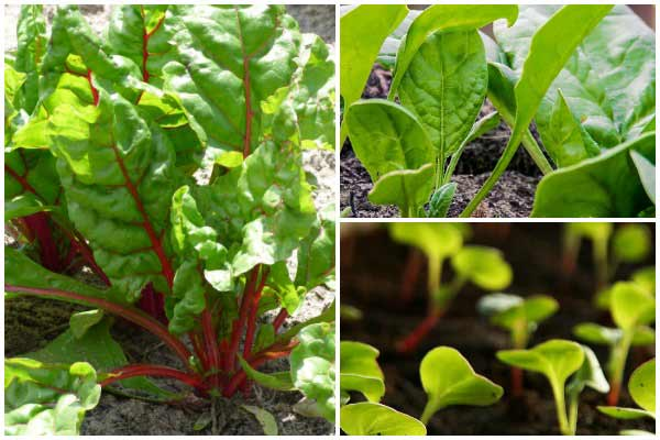 20 Quick-Growing Veggies for Fall