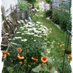 Side Garden With Daisies
